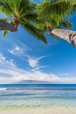 palm trees: Tropical beach with palm trees Stock Photo