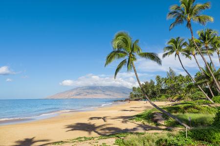 tropical beach: Tropical beach with palm trees Stock Photo
