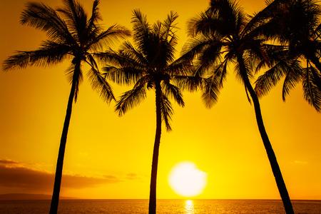 palmier: coucher de soleil tropical or Banque d'images