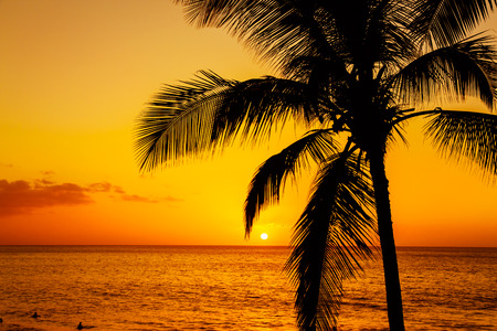 human palm: Golden tropical sunset