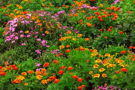 bloemen tuin achtergrond