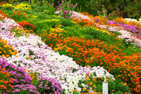 flowers garden: Garden flowers background