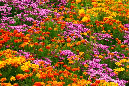 flower garden: Garden flowers background