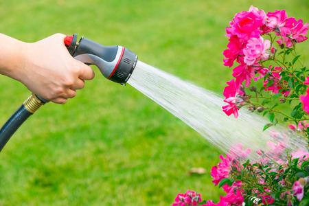 water garden: Watering flowers using hose Stock Photo