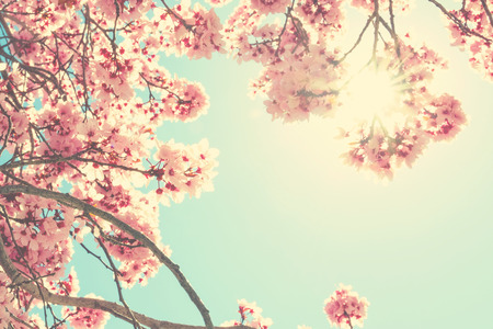 Fleurs de printemps Banque d'images - 55023219