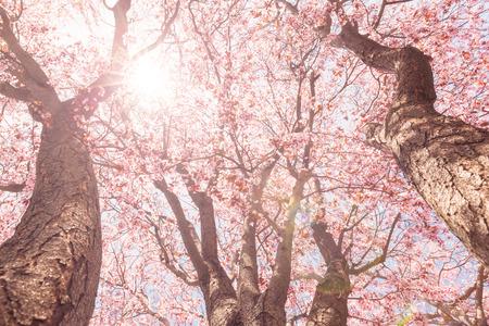 tree branch: Tree blossom Stock Photo