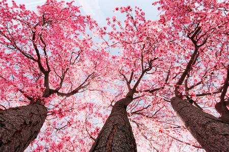 Fleur d'arbre Banque d'images - 55147284