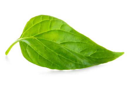 Green leaf over white background