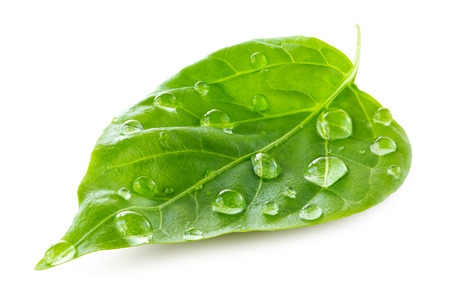 Green leaf with water drops over white background