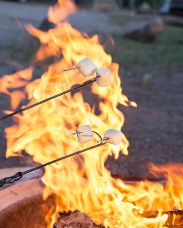 roasting: Marshmallows roasting over campfire