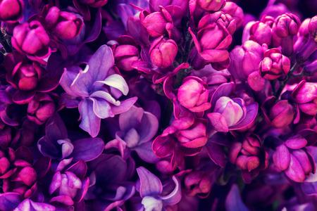 Flores de la lila de fondo