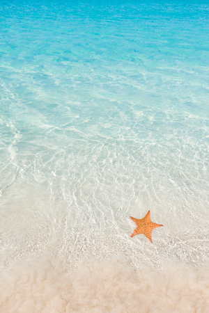 blue sea: Starfish on beach