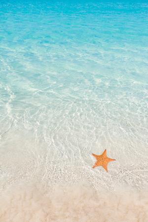 Starfish op strand