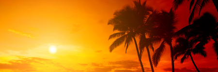 sky sun: Tropical sunset Stock Photo
