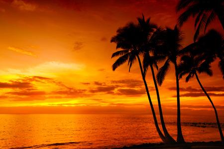 naranja arbol: Puesta de sol tropical