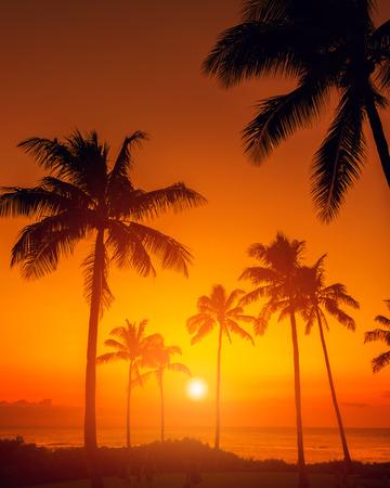 Tropical sunset Stock Photo
