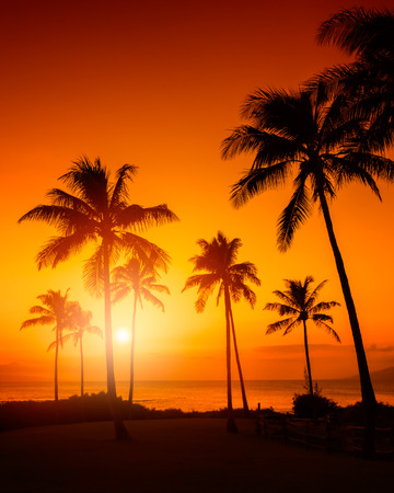 coconut trees: Tropical sunset Stock Photo