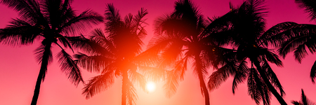 tropical sunset: Tropical sunset Stock Photo