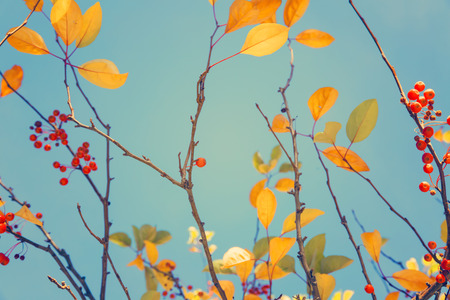 fall of the leafs: Colorful fall tree leafs against sky, vintage background Stock Photo