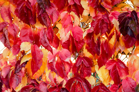 fall of the leafs: Fall leafs background Stock Photo