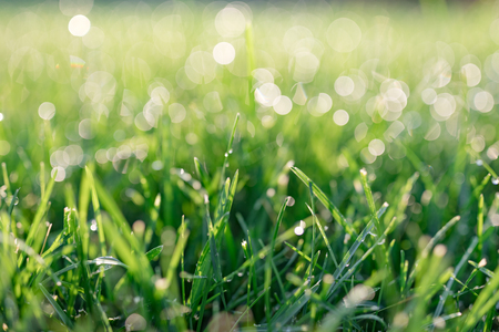 Grass field with dew drops in sunny day Stok Fotoğraf