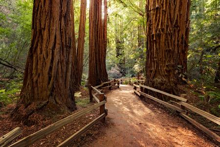 Trail through redwoods in Muir Woods National Monument near San Francisco, California, USA Stok Fotoğraf