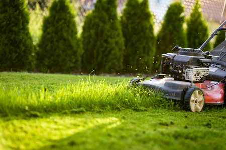 Lawn mower cutting green grass Archivio Fotografico