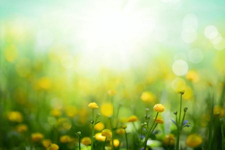 Fleurs de printemps jaunes sur fond de prairie verte