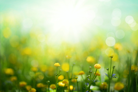 Yellow spring flowers on green meadow background