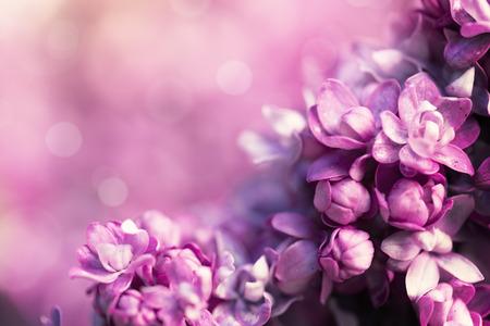Paars lila bloemen Stockfoto