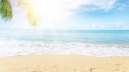 Sunny tropical beach with palm trees Stok Fotoğraf