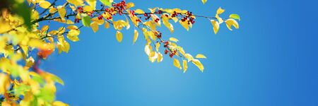Autumn tree leaves over blue sky