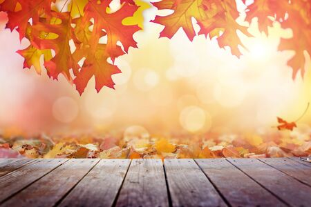 Wooden deck with autumn leaves in sunny day