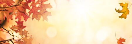 Multi colored tree leaves in autumn over sunny bokeh