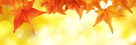 Multi colored autumn leaves in sunny day bokeh
