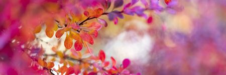 Multi colored leaves in autumn