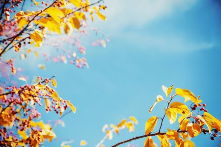 Autumn leaves on blue sky Stok Fotoğraf