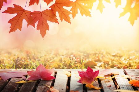 Multi colored autumn tree leaves and wooden table Stok Fotoğraf