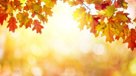 Autumn leaves sunny Stok Fotoğraf