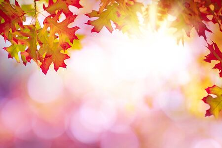 Abstract  with colorful autumn leaves Stok Fotoğraf