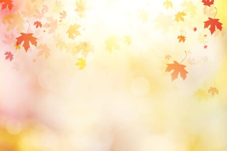Abstract autumn  with multi colored leaves