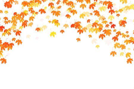 Multi colored autumn maple leaves on white Stok Fotoğraf