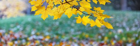 autumn leaves on tree branches close-up