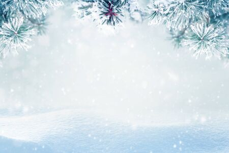 Winter background, falling snow on pine tree branches copy space Stok Fotoğraf