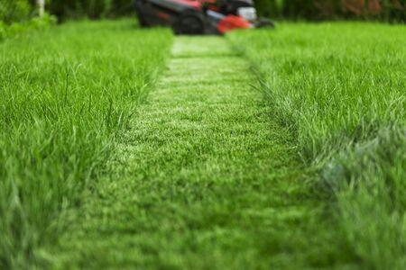 Falciatrice da giardino che taglia erba verde alta nel cortile sul retro