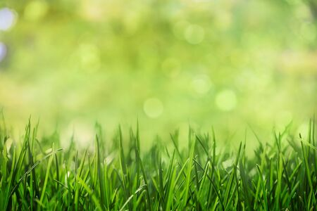 grass with natural green bokeh background