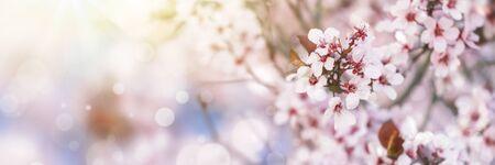 Pink tree flowers in spring blossom Reklamní fotografie