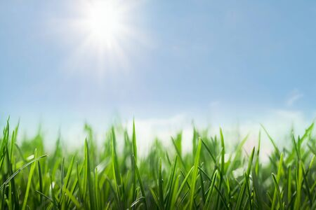 green grass and sunny blue sky