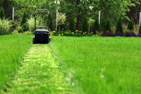 Lawn mower cutting green grass in backyard 写真素材