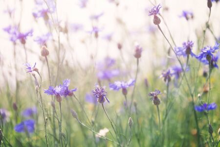 Wild flowers on sunny meadow in spring